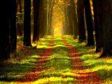 Un gol della Juve salva il pianeta con 200 nuovi alberi piantati